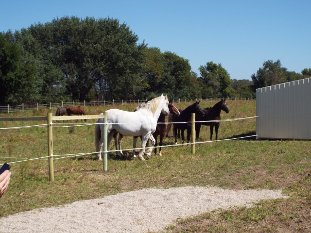 horses arriving 3